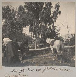 Fotoalbum Im Garten am Jakobsbrunnen [Garizim]. Zickermann.