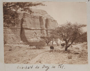 Fotoalbum Unterhalb der Burg im Tal [mizpe zohar]
