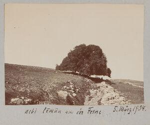 Fotoalbum nebi limun aus der Ferne. 5. März 1904.