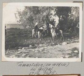 Fotoalbum Tamarisken (en-netele) bei Gilgal. 27/2 1908.