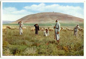 Postkarte Berg Tabor und Hirten in der Ebene Jesreel