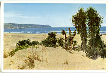 Postkarte Strand bei Haifâ [Haifa]. Links Haifâ und Berg Karmel