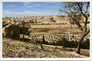 Postkarte Jerusalem. View form the Mount of Olives. Vue prise du Mont des Oliviers. Gesamtansicht vom Ölberg