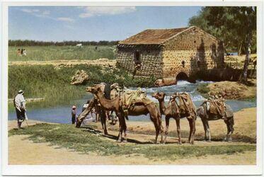 Postkarte Mill at the Nahr el-