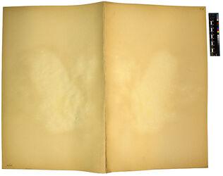 GDIh0211; Reaumuria palaestina, BOISS.; Reaumuria palaestina