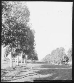 Glasplattendia Eukalyptus-Allee v. Wilhelma