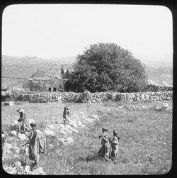 Glasplattendia Ruins of Shiloh