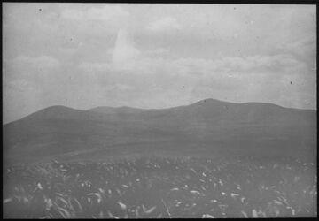 Glasplattendia Gilboagebirge von zer