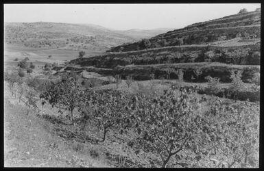 Glasplattendia Samarische Landschaft bei Silo