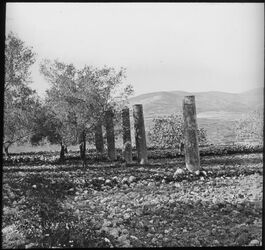 Glasplattendia Palästina Samaria=Sebastije Säulen [Sebastie]