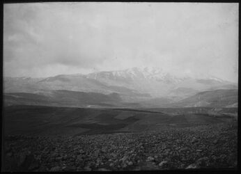 Glasplattendia [Libanon-Gebirge]