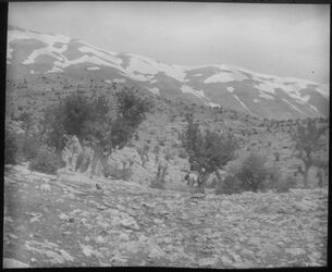Glasplattendia Libanon v. d. Vorbergen zw. Der el-aharon u. aineta