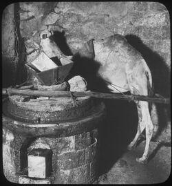 H XIX 17; Glasplattendia; Oil Press [Ölpresse, Jerusalem]