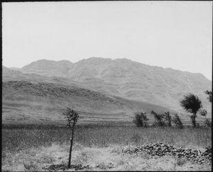 Glasplattendia Antilibanos (Gebel es-sakif) v. serraja