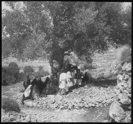 Glasplattendia Wady bibir, rastende [durchgestrichen] Beduinen [Dalmans Handschrift] Bauern