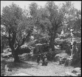Glasplattendia Hebron. Oelbaumgarten