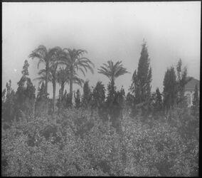 Glasplattendia Apfelsinengarten in Jaffa [Tel Aviv]