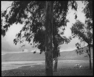 Glasplattendia chet-See [hule] v. SW mit Eucalypt.