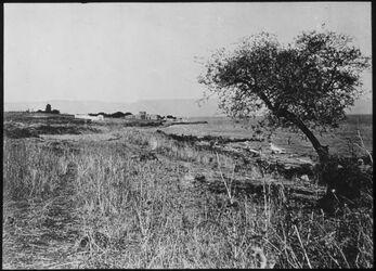 Glasplattendia Tell hum [Kaparnaum] v. W. ältere Aufnahme, Palästina, Capernaum