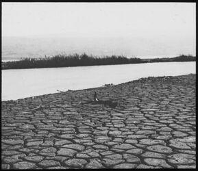 Glasplattendia Jordanmündung in d. T. Meer [Totes Meer]