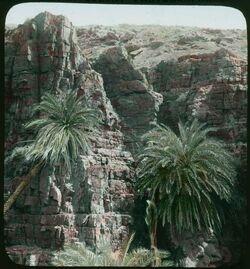 Glasplattendia Wady El-Nakhl T. Meer [Totes Meer]
