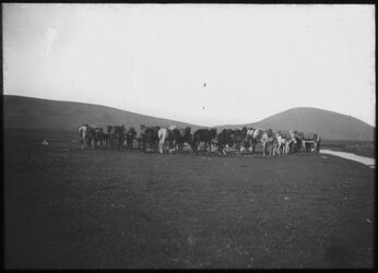 Glasplattendia Unsere Pferde bei elkunetra [El-kunetra]