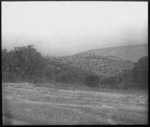 Glasplattendia Östl. mukes, Parkwald wadi el-hamme