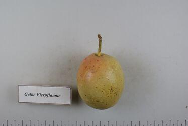 Pflaume Gelbe Eierpflaume