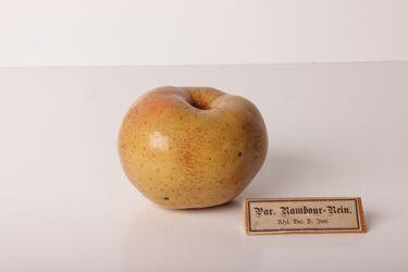 Apfel Pariser Rambour-Rein