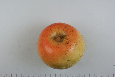 Apfel v. Duvens Zucker-Reinette