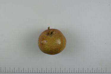 Apfel Zitzen-Reinette