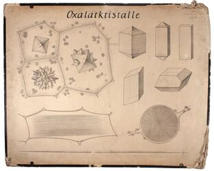 Lehrtafeln Oxalatkristalle